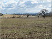 NZ0367 : Farmland on Carrs Fell (2) by Mike Quinn
