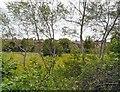 SJ9291 : Egerton Park Community Orchard by Gerald England