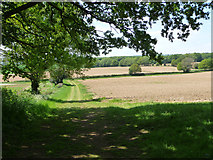SU7824 : Field west of the Sussex Border Path by Chris Gunns