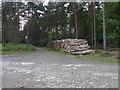SU8963 : Swinley Forest, log pile by Alan Hunt