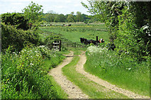 TM4592 : Track into the marshes by Sutton's Farm, Aldeby by Evelyn Simak
