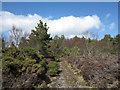 NH6890 : Regenerating woodland by Trevor Littlewood