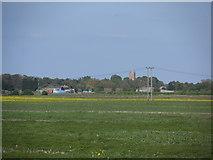 TL4568 : Tower of All Saints Church Cottenham from across the fields by Bikeboy
