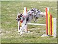 SD6342 : Jumping the Hurdle by David Dixon