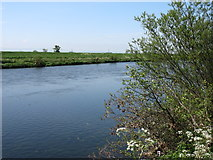 NY4459 : The River Eden near Crosby-on-Eden by David Purchase