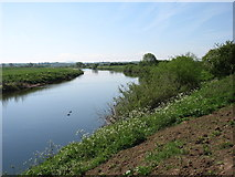 NY4358 : The River Eden below Crosby-on-Eden by David Purchase