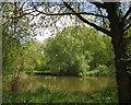 TQ0664 : Willow on the Wey by Derek Harper