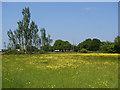 SU9176 : Buttercup field by Alan Hunt