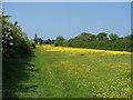 SU9176 : The long field by Alan Hunt