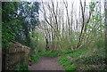 TQ6769 : Byway, Ashenbank Wood by N Chadwick