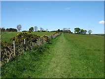 NY9868 : The Hadrian's Wall Path heading for Chollerford by David Purchase