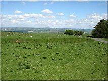 NY9569 : Fields on Errington Hill by David Purchase