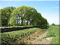 NY9469 : The Hadrian's Wall Path beside the Ditch (1) by David Purchase