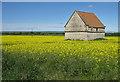 SE7373 : Oilseed rape crop, Appleton-le-Street by Pauline E