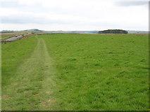 NY8471 : The Hadrian's Wall Path near Carraw by David Purchase