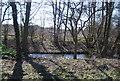 TQ5670 : River Darent by N Chadwick