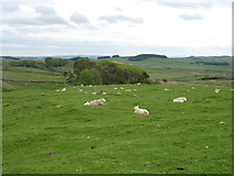 NY7968 : Looking across Chapel Hill from Housesteads by David Purchase
