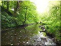 NZ3374 : A Tranquil Stretch of the Seaton Burn by Bill Henderson