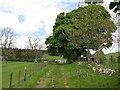 NT9508 : Farm road, Biddlestone by Richard Webb