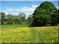 SO4513 : On part of Offa's Dyke Path in Monmouthshire meadows in June by Jeremy Bolwell