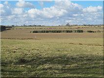 NZ0367 : Farmland east of Shildonhill and Carrsfell Plantations by Mike Quinn