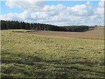 NZ0367 : Farmland and Shildonhill Plantation by Mike Quinn