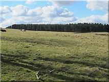NZ0367 : Farmland and Shildonhill Plantation (2) by Mike Quinn