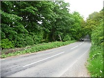 SK6054 : The road through Haywood Oaks by Christine Johnstone