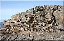 NJ1570 : Daisy Rock by Anne Burgess