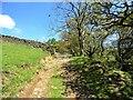NZ0642 : Track beside White Crag Plantation by Robert Graham