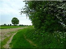 SU4773 : The Orange Way after Wiltshire (83) by Shazz
