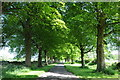 ST8795 : Avenue of lime trees by Philip Halling