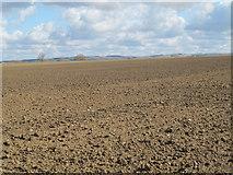 NZ0666 : Farmland east of Cobbler's Lane (2) by Mike Quinn