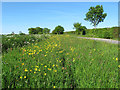 TM4482 : Buttercup verge, Southwell Road, Stoven by Roger Jones