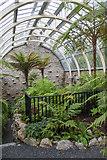 NS1385 : Interior of Benmore Fernery by David P Howard