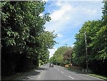 TA2904 : Humberston Avenue, New Waltham by Steve  Fareham