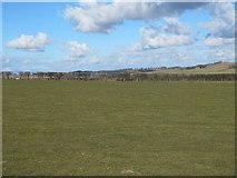 NZ0665 : Farmland southeast of Nafferton Farm by Mike Quinn