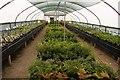 SP1346 : Ferns in the nursery by Steve Daniels