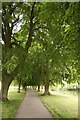 SP0343 : Avenue of lime trees in Crown Meadow by Steve Daniels