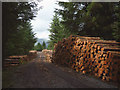 SD3295 : Freshly cut timber by the track, Grizedale Forest by Karl and Ali