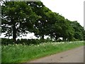 SK8823 : Leicestershire roadside trees by Christine Johnstone
