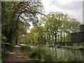 TQ0561 : Basingstoke Canal by Derek Harper