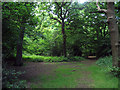 TQ2888 : Path, Queen's Wood, near Muswell Hill by Julian Osley