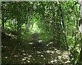 TQ5235 : High Weald Landscape Trail in Rock's Wood by David Anstiss