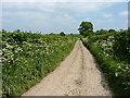 SJ4305 : A very narrow lane by Richard Law