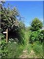 NU0740 : Footpath between fields, Fenwick Granary by Graham Robson