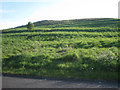 NT2773 : Former cultivation terraces above Dunsaple Loch, Holyrood Park by Robin Stott