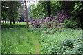 SP9534 : Path through the Woburn estate by Philip Jeffrey