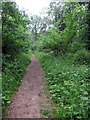 TL0639 : Path through Maulden Wood by Philip Jeffrey