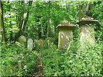 TQ3386 : Glade in Abney Park Cemetery by Marathon